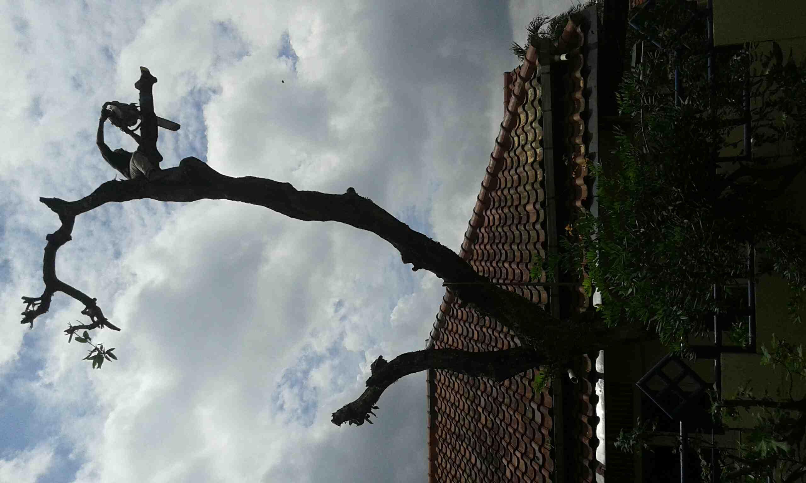 Foto: Jasa Tebang Pohon Jakarta