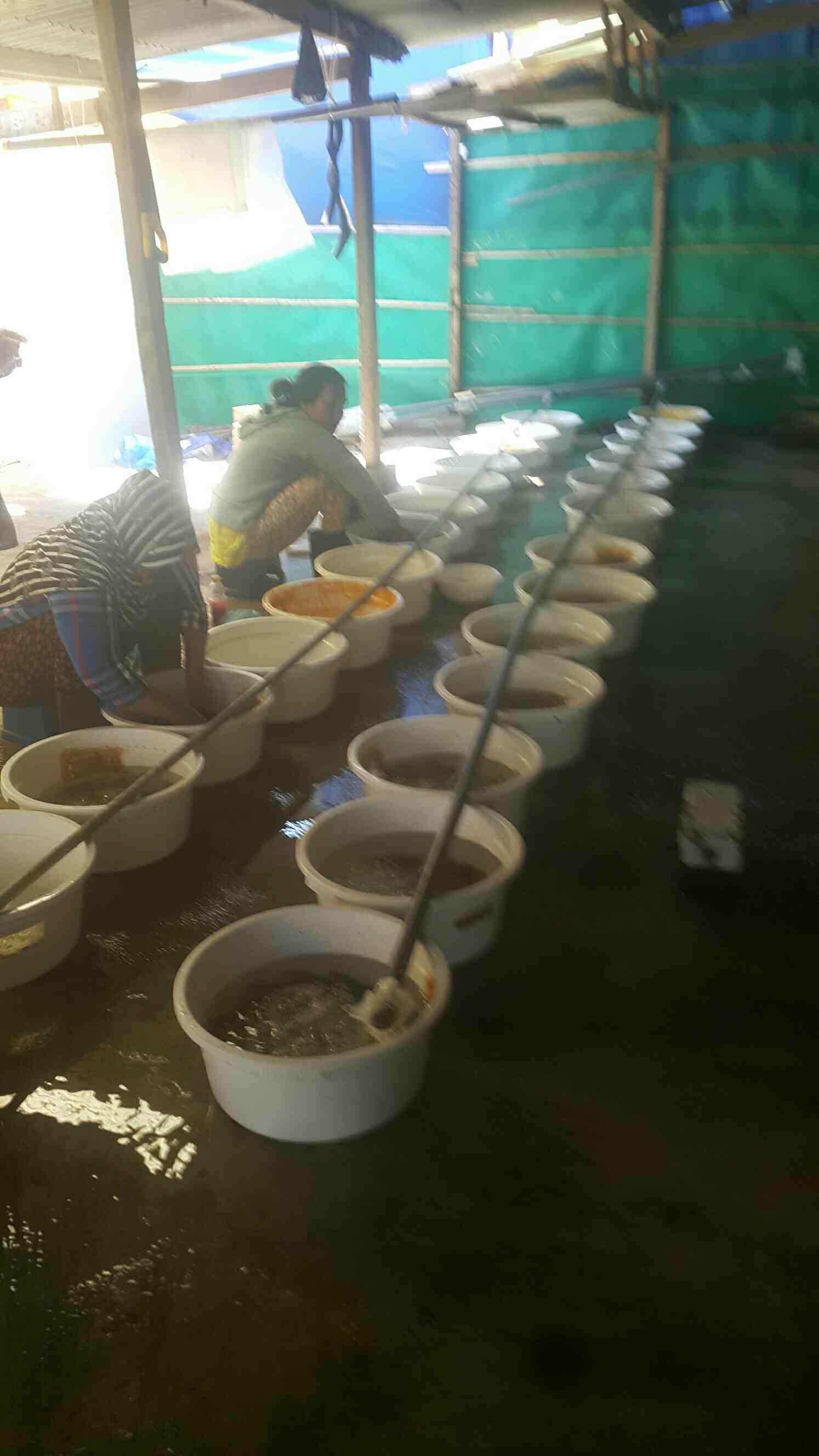 Foto: Jual Bibit Ikan Kerapu