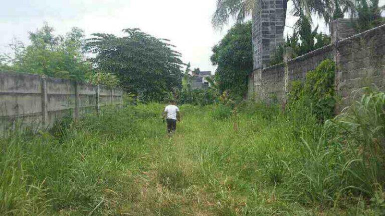 Foto: Jasa Potong Rumput Tangerang