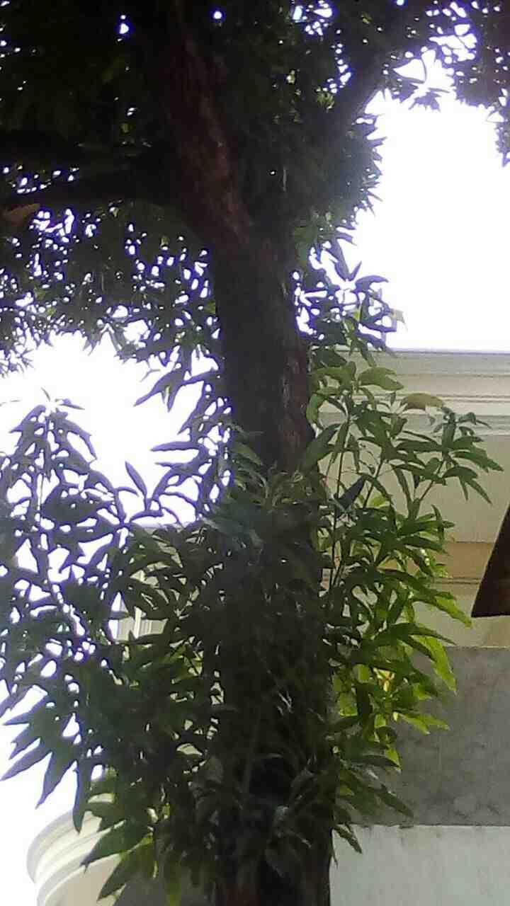 Foto: Jasa Tebang Pohon dan Cabut Akar Pohon Jakarta