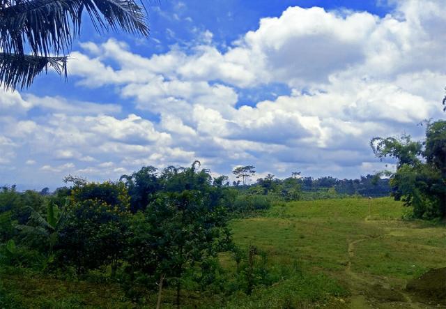 Foto: Tanah Kavling Kampus